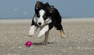 Cani terremotati
