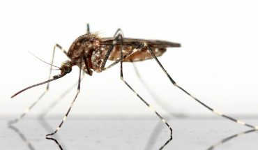 Puntura zanzara rimedi naturali